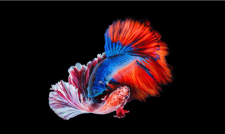 Công nghệ màn hình OLED có màu sắc sống động, rực rỡ bắt mắt