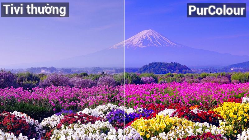Công nghệ hình ảnh PurColourTivi Samsung 4K 55 inch UA55NU7100