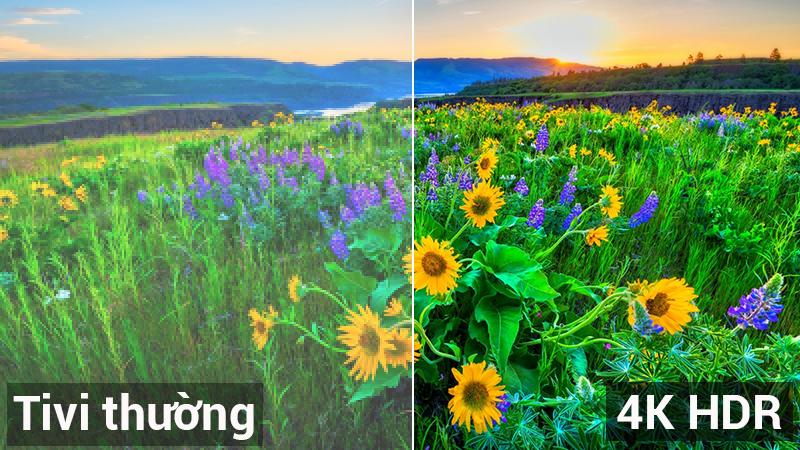 Độ phân giải 4K đi kèm công nghệ HDR cho hình ảnh sắc nét độ tương phản cao