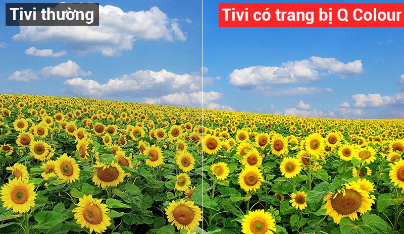 Công nghệ hình ảnh Q Colour cho hình ảnh rực rỡ chân thật hơn bao giờ hết