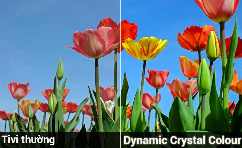 Công nghệ Dynamic Crystal Colour trên Tivi Samsung 43 inch UA43NU7800